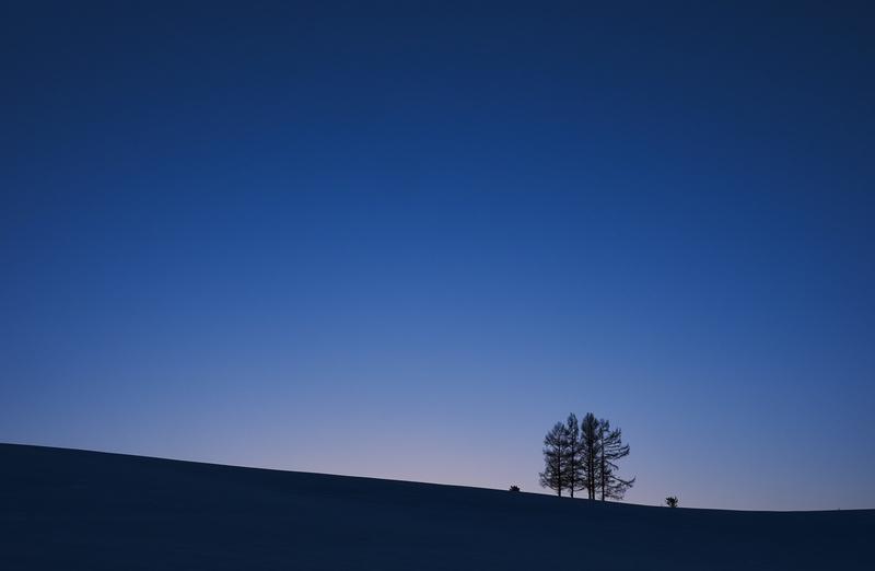 背景ー夕暮れと木ー