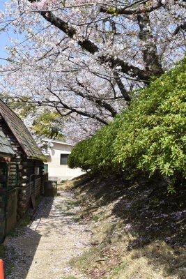 f:id:larayuki:20180401210412j:image