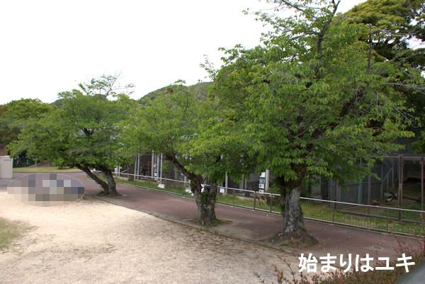 f:id:larayuki:20210423122532j:plain