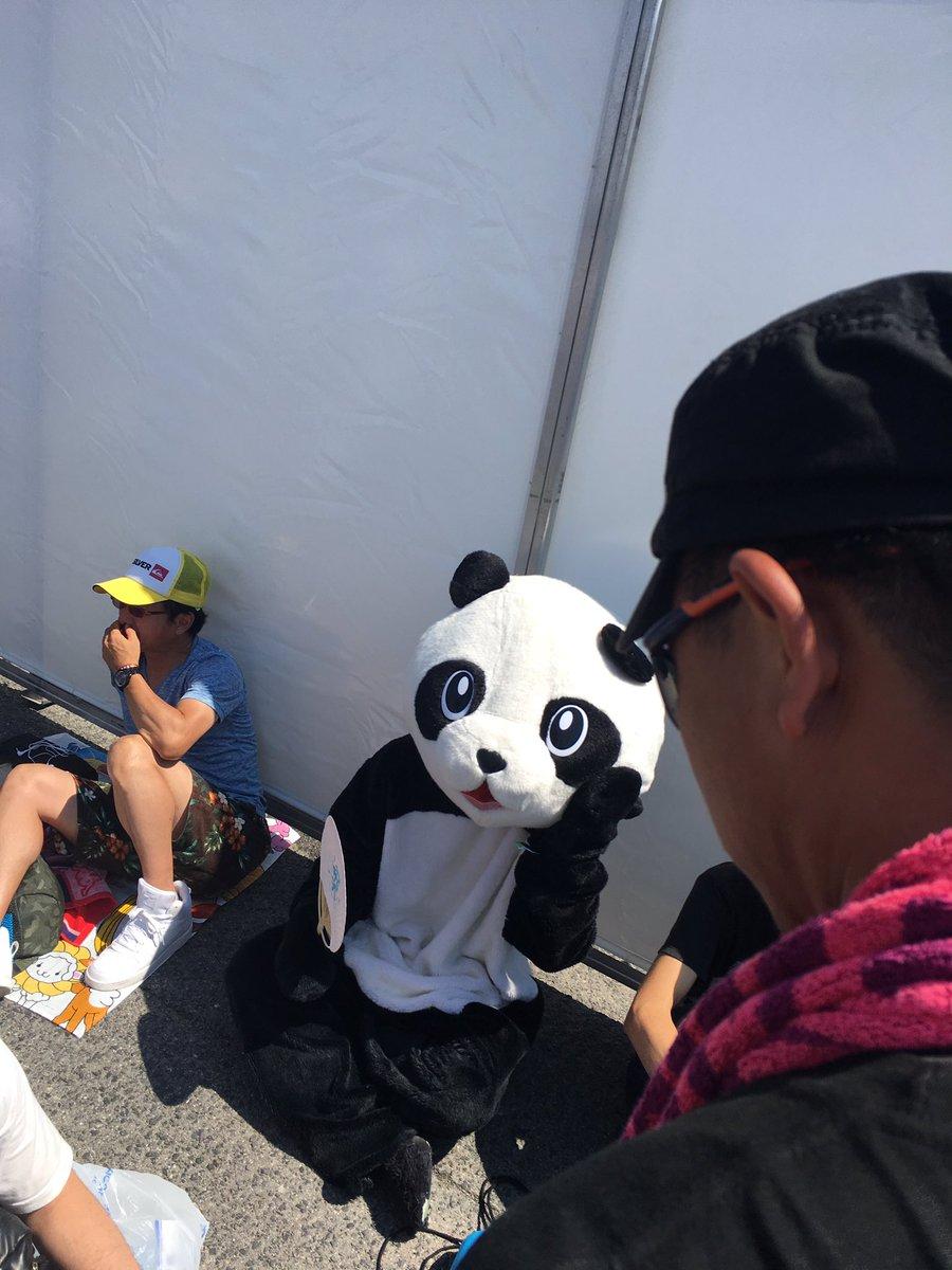 サマソニ大阪のパンダ目撃情報www3年連続