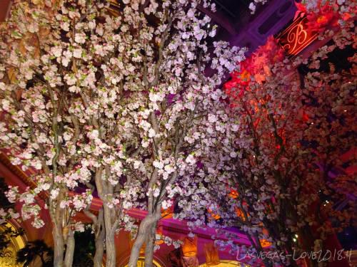 花見 夜桜