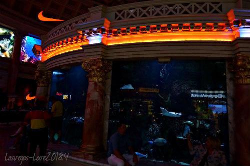 水槽 Atlantis Aquarium