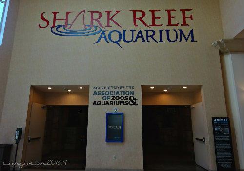 シャークリーフ 水族館