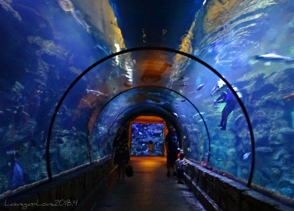 Shark Reef Aquarium