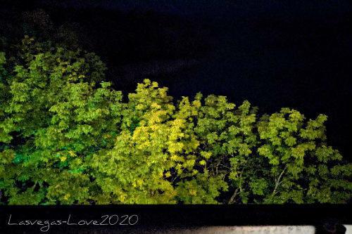 f:id:lasvegas-love:20201231192156j:plain