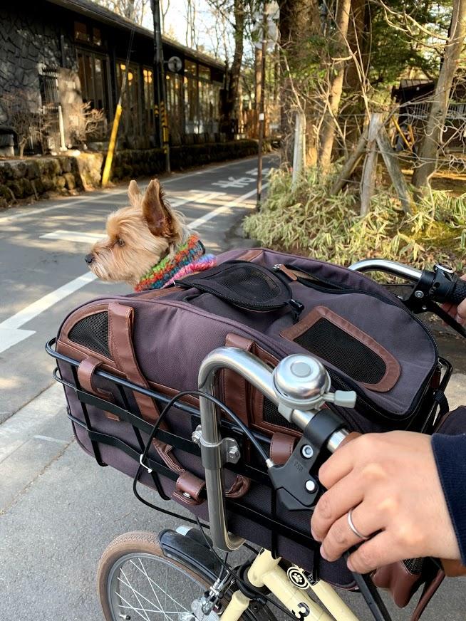 犬 軽井沢 自転車