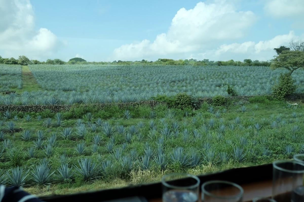 テキーラ列車