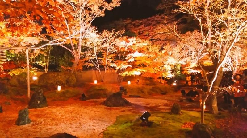 宮城県 松島の紅葉ライトアップ
