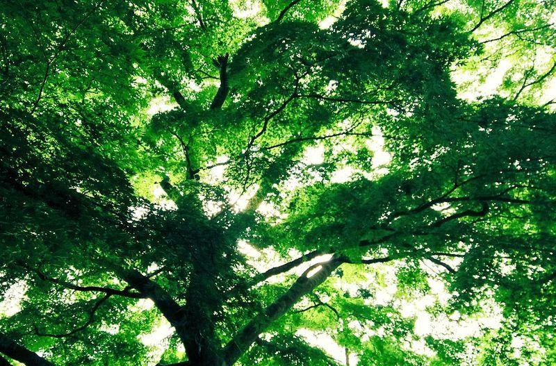 松島の植物