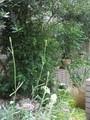 庭づくり[名古屋][ナチュラルガーデン][ハーブのある庭]