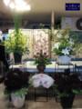 [スタンド花][フラワーアレンジ][名古屋市名東区一社][花屋][祝い]フラワーアレンジ制作風景