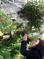 [le Soleil][東山植物園]東山植物園 温室 le Soleil(ソレイユ)