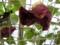 東山植物園 温室 le Soleil(ソレイユ)