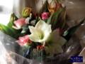 花束 名古屋 アマリリス