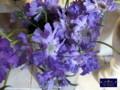 早春のお花たち 名古屋