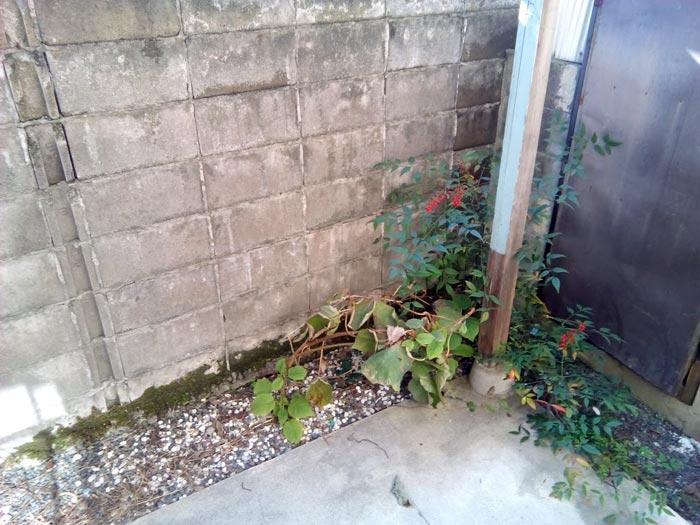 旧内観:小さい庭