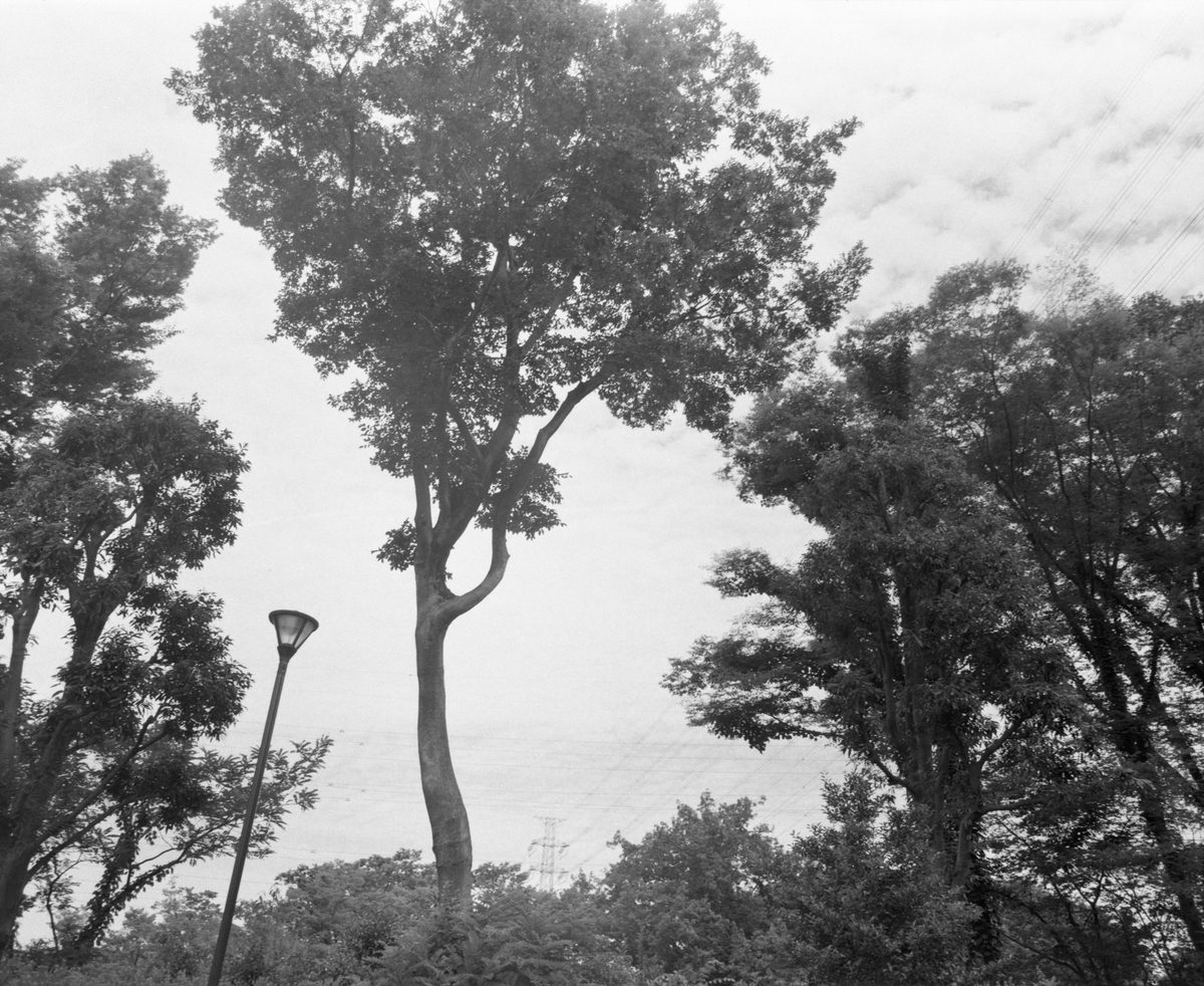 マミヤRB67にて撮影 モノクロ 自家現像