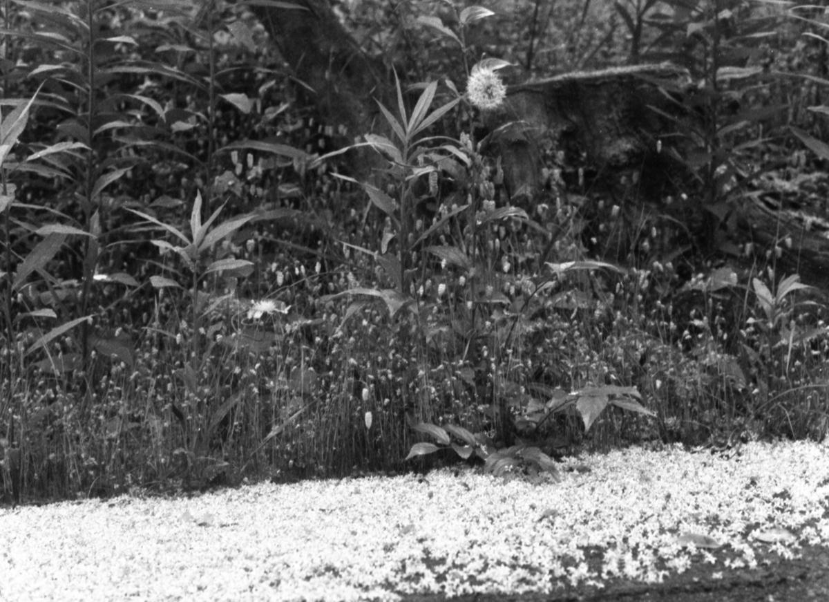 キヤノン デミEE17にて撮影 モノクロ 自家現像