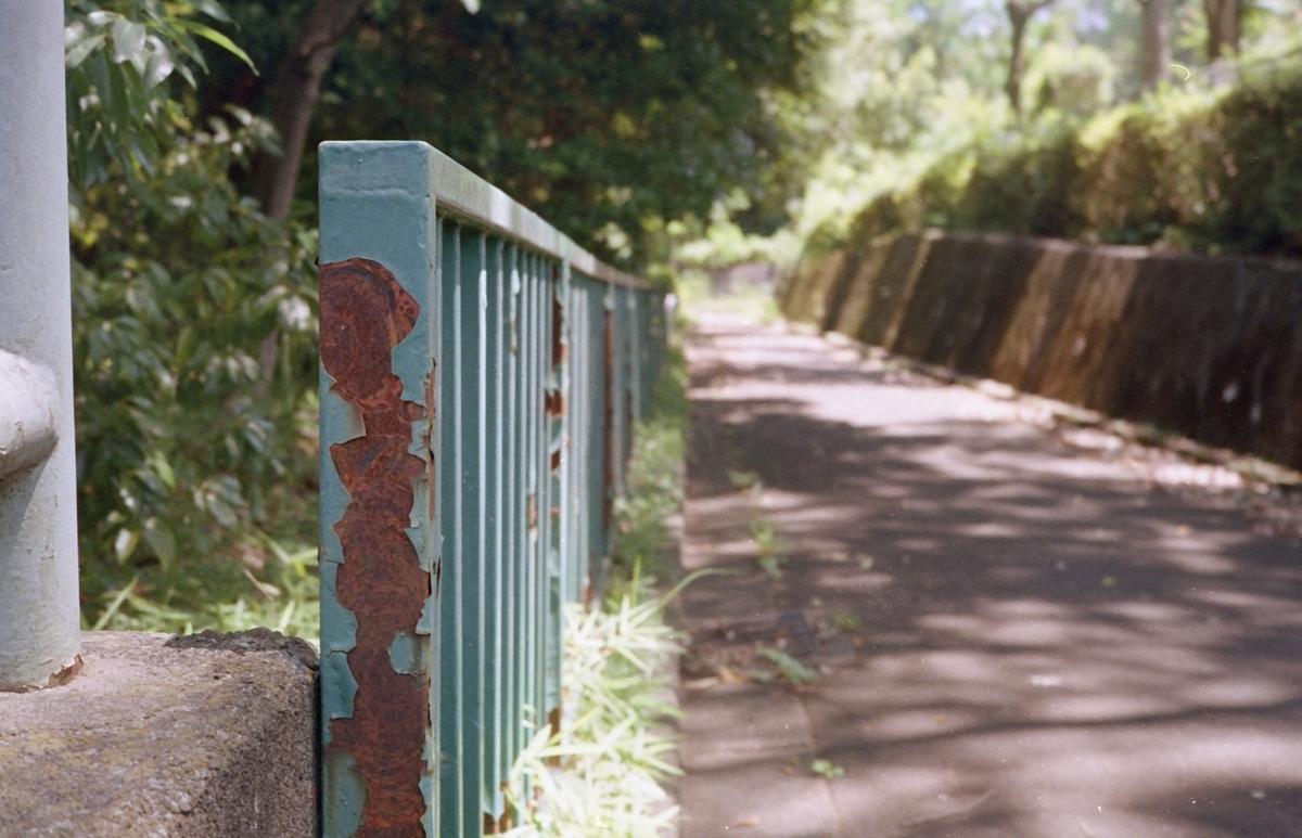 オリンパス35DCにて撮影 カラーネガフィルム 自家現像
