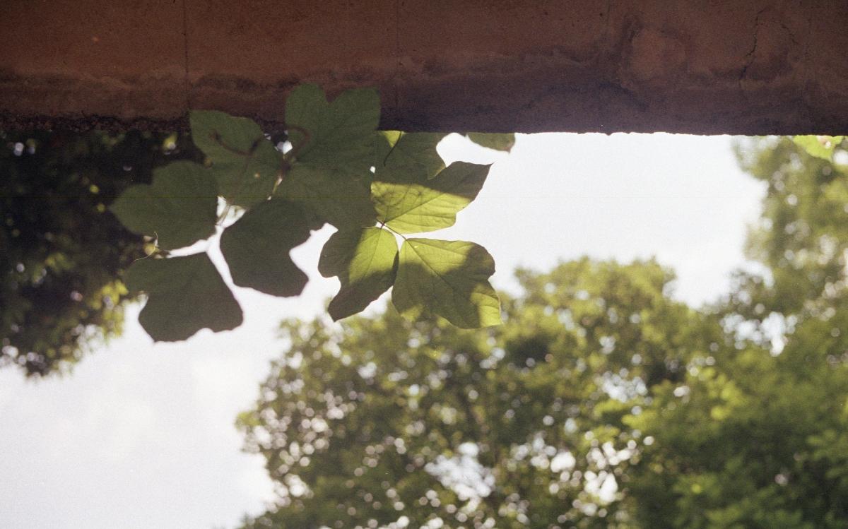 フジカST801にて撮影 カラーネガフィルム 自家現像