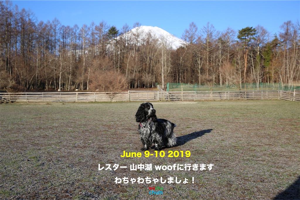 f:id:leicestergram:20190526164415j:image