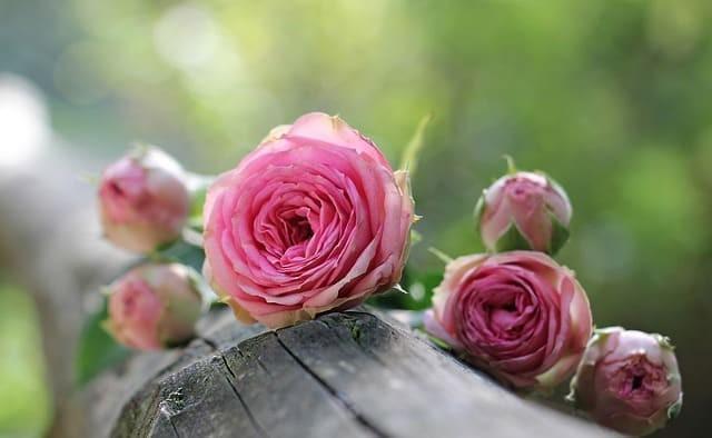 陰性症状が治り、心の中に美しい花が咲いた様子