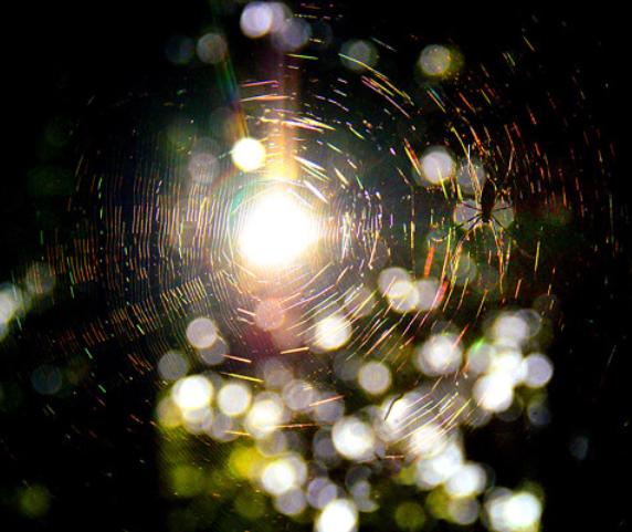 f:id:lemurian-crystal-NINA:20201018120612j:plain