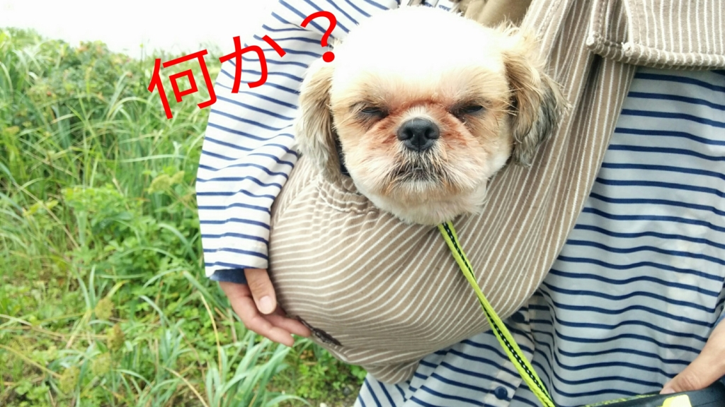 f:id:leo-roy:20160830173702j:plain