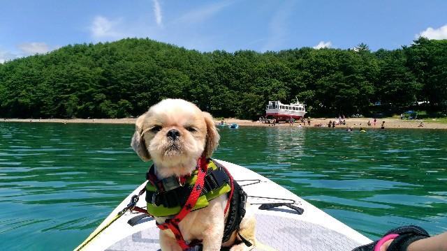 田沢湖でSUPする犬