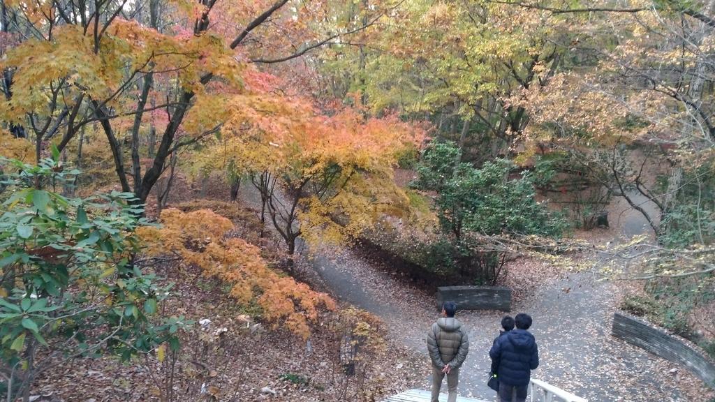 秩父ミューズパークの紅葉と雲海