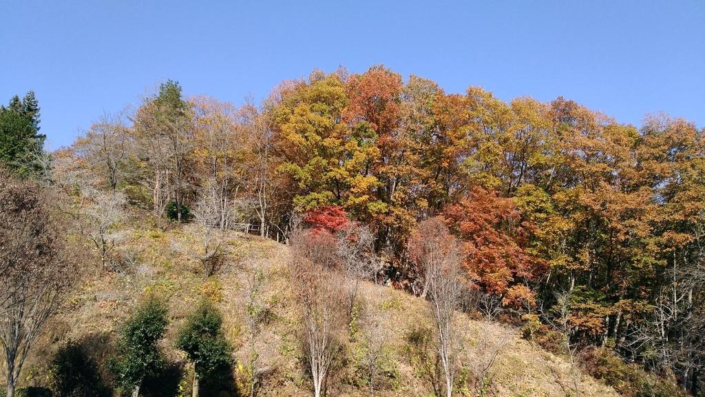 RVパークみどりの村 馬 乗馬 山の中 自然
