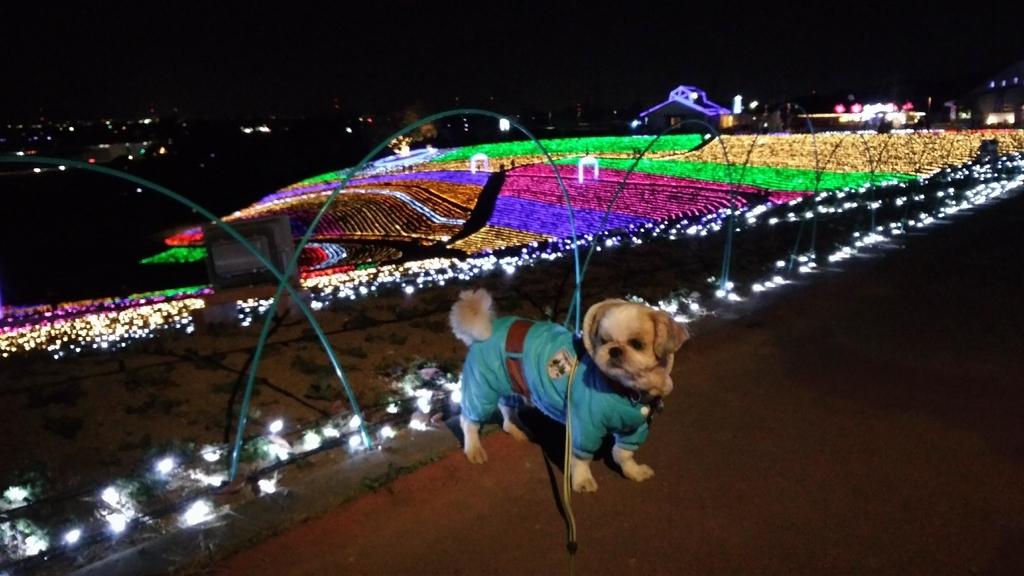 おおたイルミネーション・八王子山公園(太田市北部運動公園)はペット同伴可能