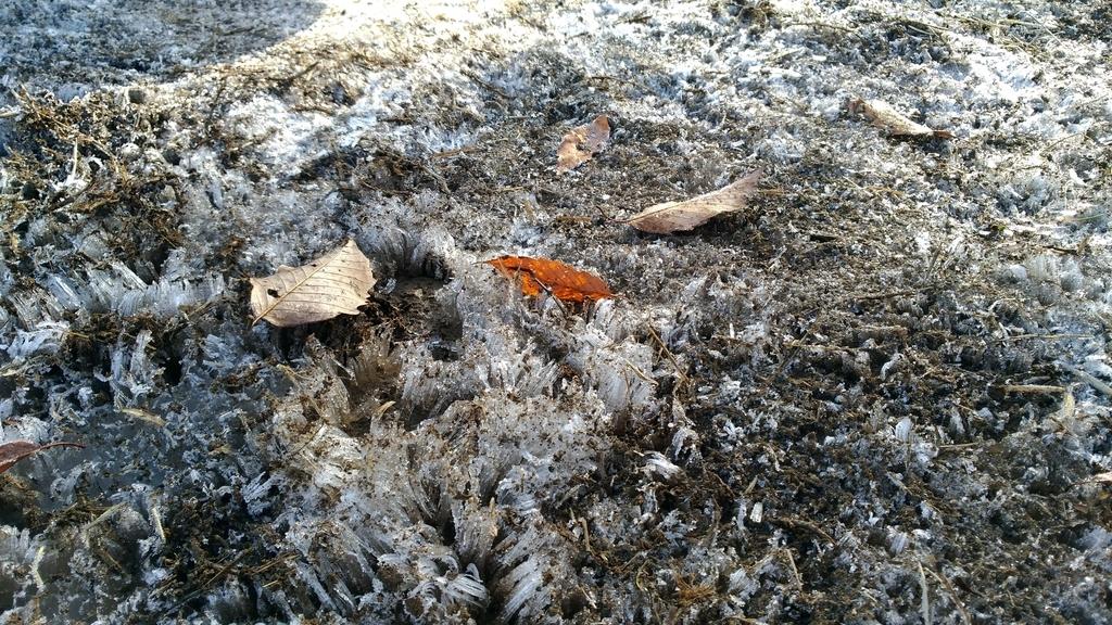冬キャンプで霜柱
