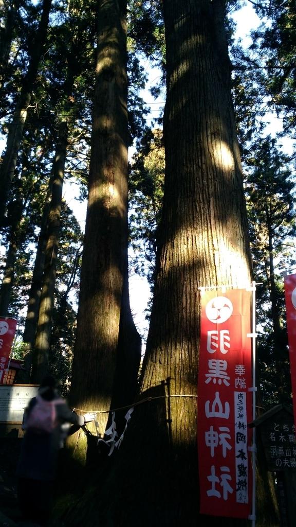 羽黒山神社の夫婦杉