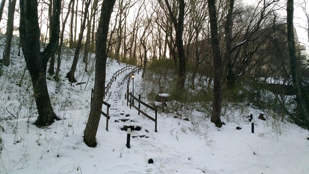 小川に続く階段