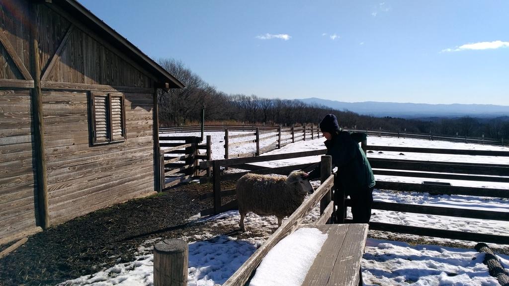 羊の飼育員