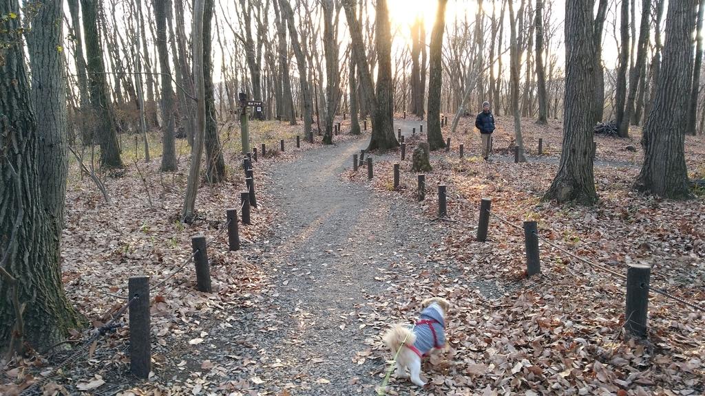 ろまんちっく村のみのりの森の冬