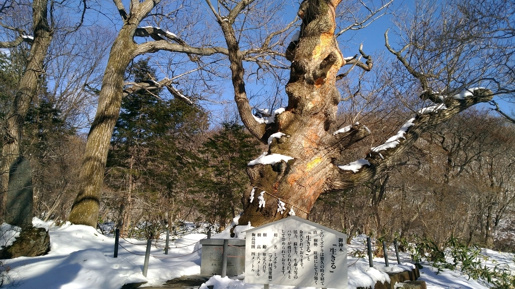 那須温泉神社の御神木『生きる』