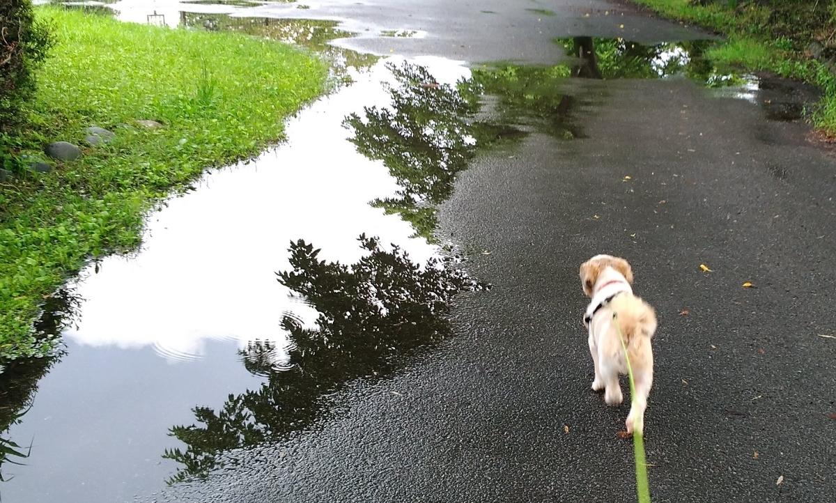 雨 犬 散歩