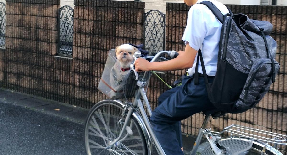 犬 自転車の籠