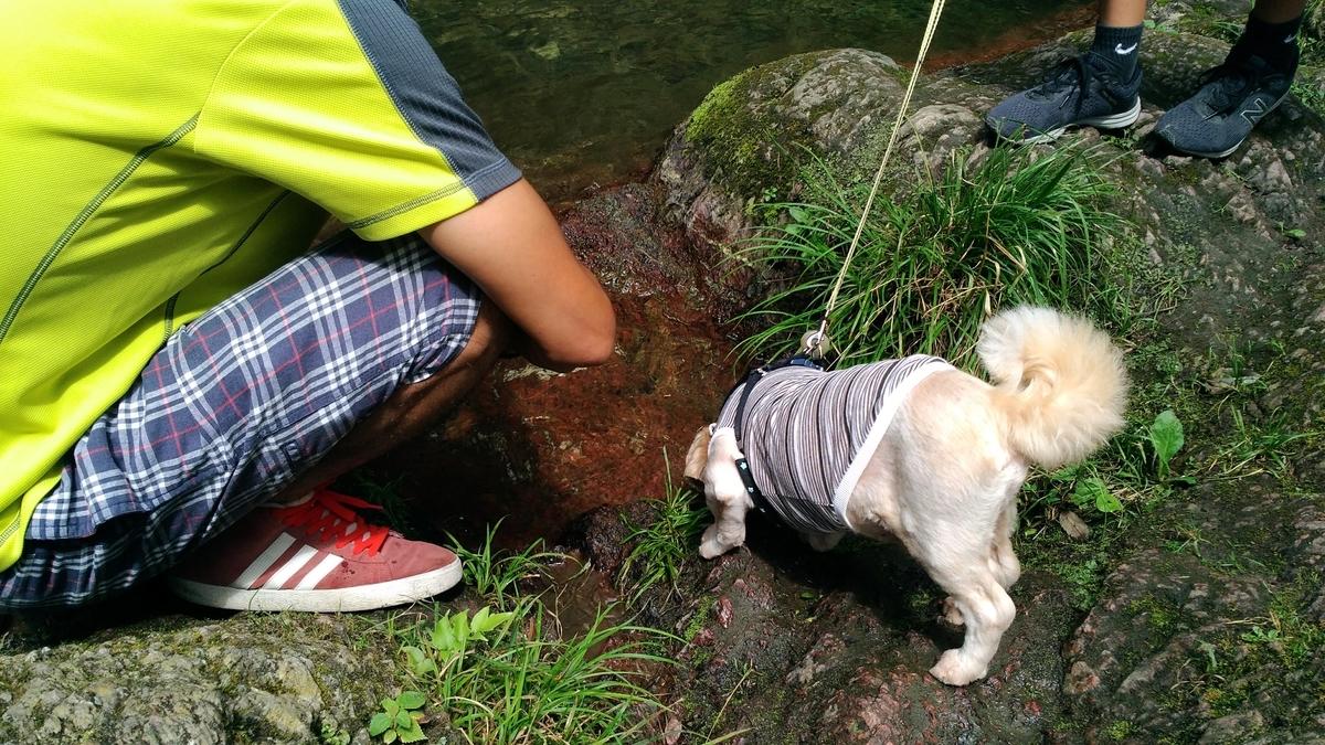 秩父華厳の滝 犬