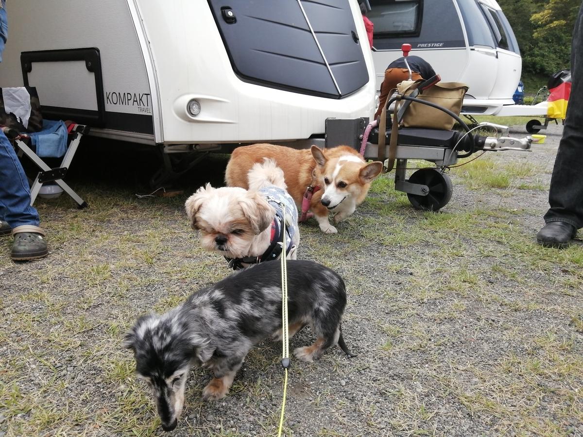 犬の集まり
