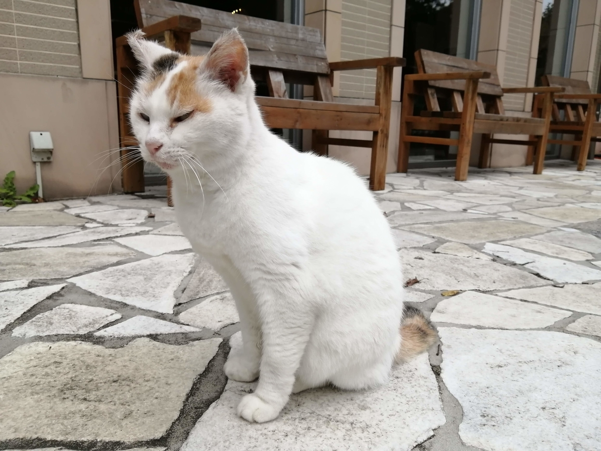 ホテル フロラシオン那須 猫