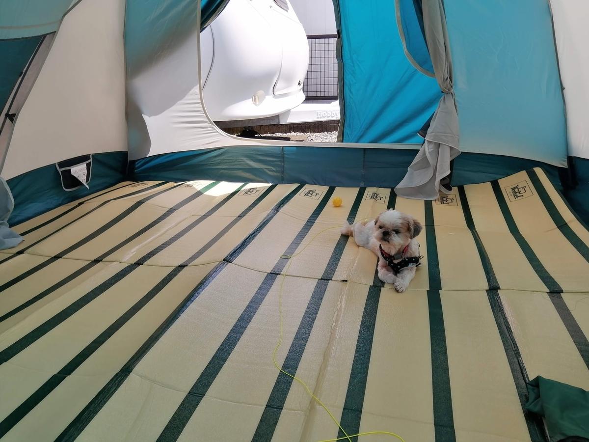 自宅 庭 キャンプ テント泊