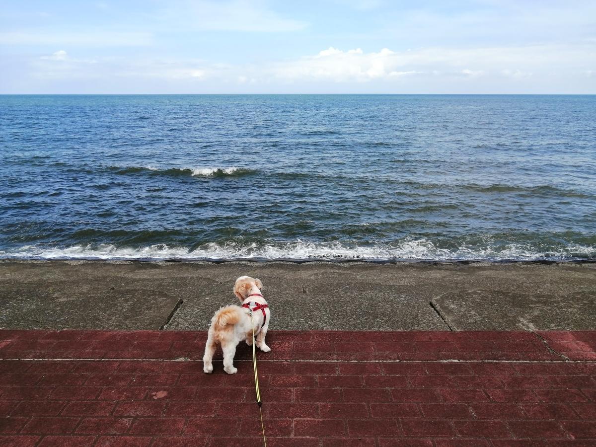 紫雲寺記念公園オートキャンプ場 キャンピングトレーラー キャンプ 犬