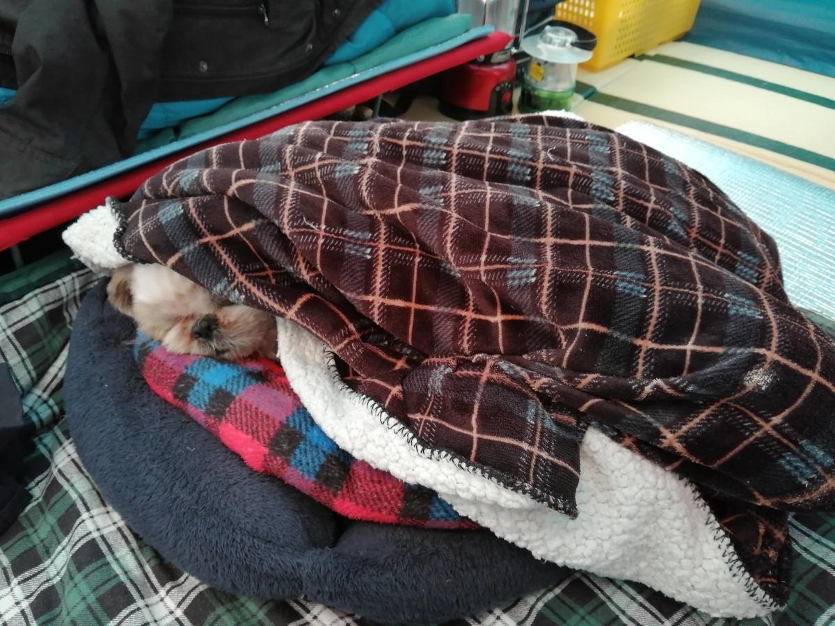 シーズー キャンプ テント 寝る