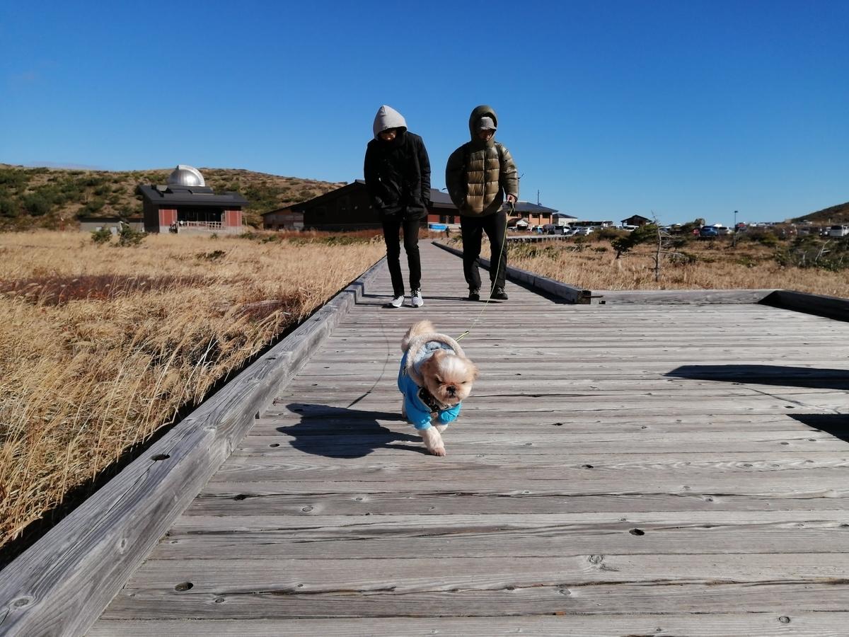吾妻小富士 ペット 犬連れ 湿原散策