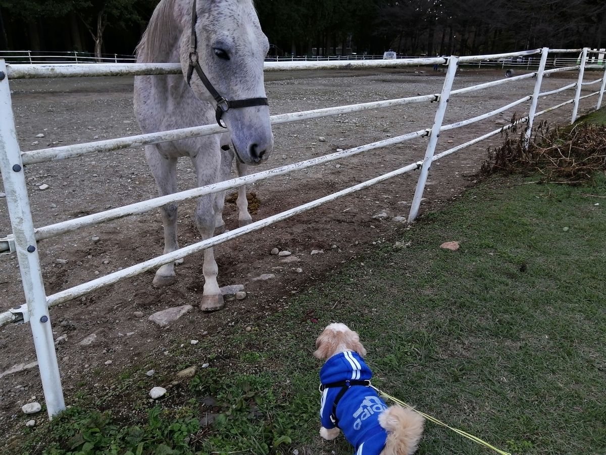 千本松牧場 犬連れ ペット
