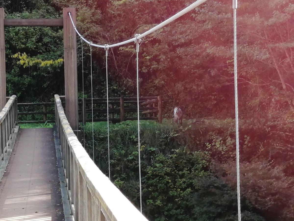 土湯温泉 滝のつり橋 カモシカ 野生