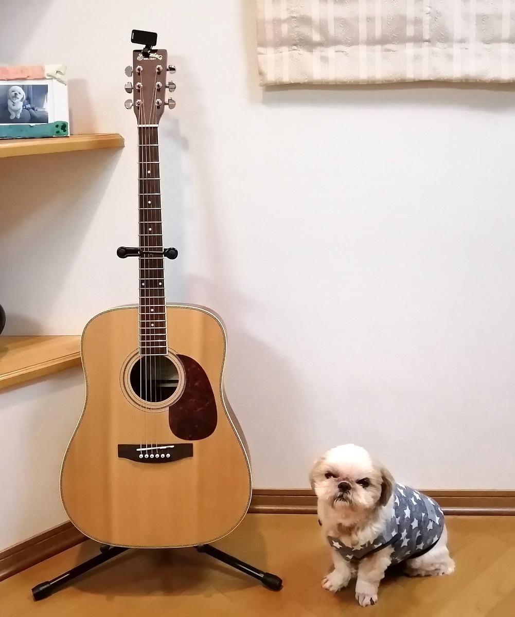 アコースティックギター 新しい趣味